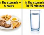Hóa ra uống nước trong khi ăn có thực sự gây hại cho chúng ta?